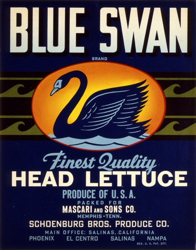 Product Image for Blue Swan 18x24