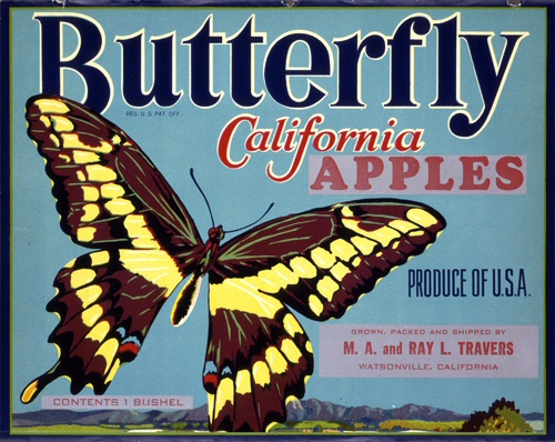 Product Image for Butterfly 18x24